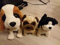 Отдается в дар Собаки