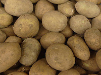 Отдается в дар картошка