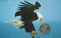 Отдается в дар Монета США