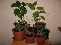 Отдается в дар Молодые растения, детки, черенки — 11 разных