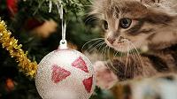 Отдается в дар Подарок к Новому году для вашего малыша.