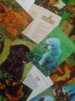 Отдается в дар комплект открыток про собак