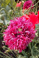 Отдается в дар Семена цветов