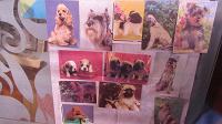 Отдается в дар Календарики коллекционерам 3 Собаки