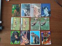 Отдается в дар Календарики животные