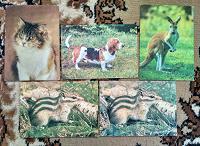 Отдается в дар Открытки с животными