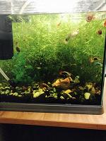 Отдается в дар Водоросли и улитки в аквариум