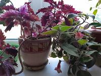 Отдается в дар Отростки домашних растений