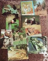 Отдается в дар Зоопарк 2
