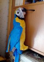 Отдается в дар попугай (игрушка)