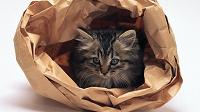 Отдается в дар Кот в мешке (косметика, без лаков для ногтей)