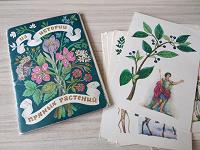 Отдается в дар Открытки Из истории пряных растений