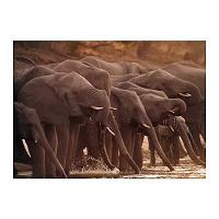 Отдается в дар Икеевская картина со слонами