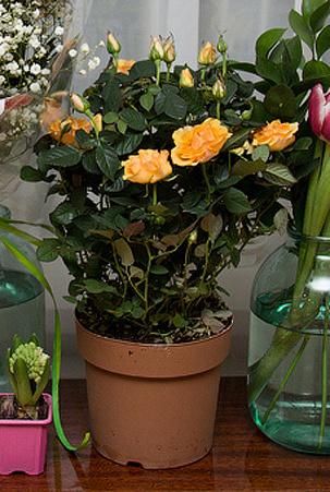 Цветы даром в екатеринбурге круглосуточно, цветы левкои