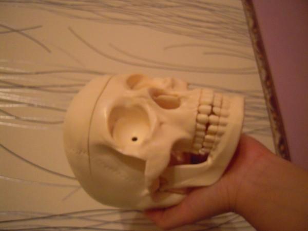 часть скелета