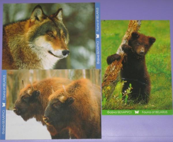 Открытки серии фауна беларуси