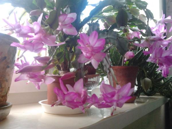 Цветы даром в екатеринбурге круглосуточно