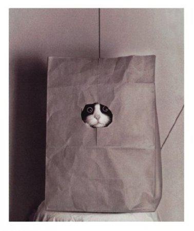 Рукодельный кот в мешке