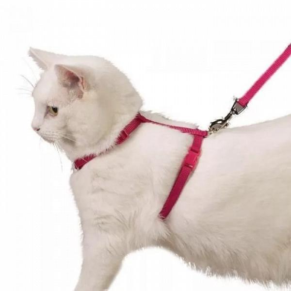 дам шлейка для кошек как одеть в картинках правило, мужчины